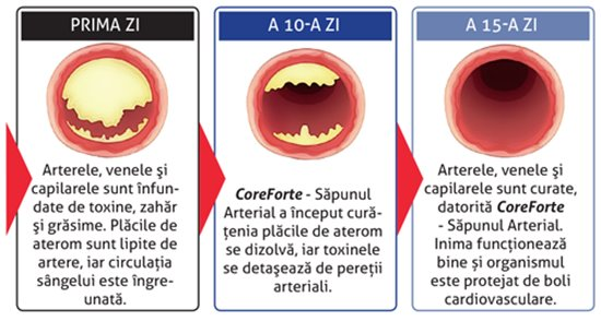 CoreForte Sapun Arterial forum